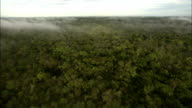 Thin fog settles over the Amazon rainforest. Available in HD.