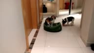 This 10weekold French Bulldog named Pixel finally gets his revenge on the cat who keeps stealing his bed According to user 'piotrbuchalik' Pixel...
