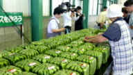 This year's shipments of ornamental watermelons known for their rare square shapes started Thursday in western Japan with wholesale prices of around...
