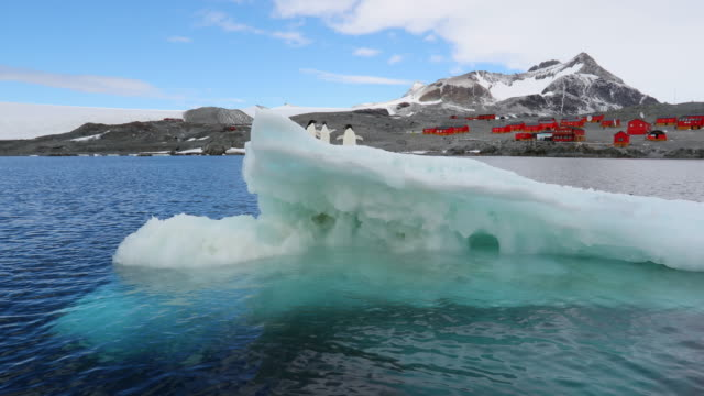 Three Adelie Penguins on an Iceberg with Base Esperanza behind (Argentine research station)