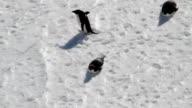 MS HA three Adélie penguins, Antarctica