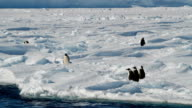 WS three Adélie penguins looking at the snow ahead of them, Antarctica