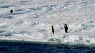 Three Adélie penguins on snow next to the water, Antarctica