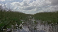 MS three airboats traveling through swamp