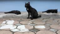 Three black cat to sleep.