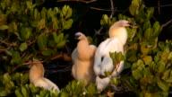 Drei Chicks immer zu groß für ihr Nest