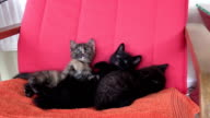 three cute kittens cuddle play and doze on red armchair