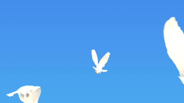 Three Doves Flying Away (Super Slow Motion)