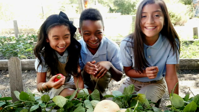 Three friends examine vegetables on a class field trip at a local farm