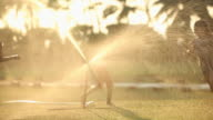 Three girls playing around lawn sprinkler in a park