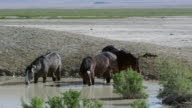 Three horses standing in water hole getting a drink