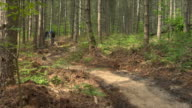 WS Three men cycling on winding wooded path in Bedgebury Forest / Kent, England, UK