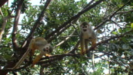 Three monkeys jumping on trees