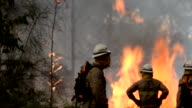 Three people have died in raging forest fires on Portugal's holiday island of Madeira where flames damaged homes and a hotel and forced around 1000...
