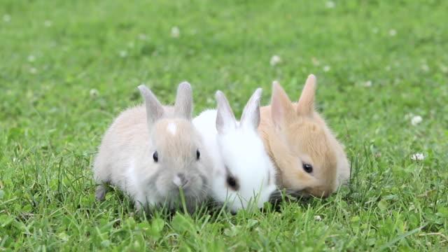 Three rabbits sitting on grass eating