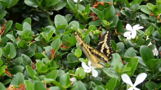 Three videos of butterfly in 4K