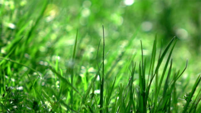 Three videos of grass swinging on the wind-real slow motion