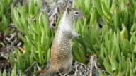 Three videos of squirrel in 4K