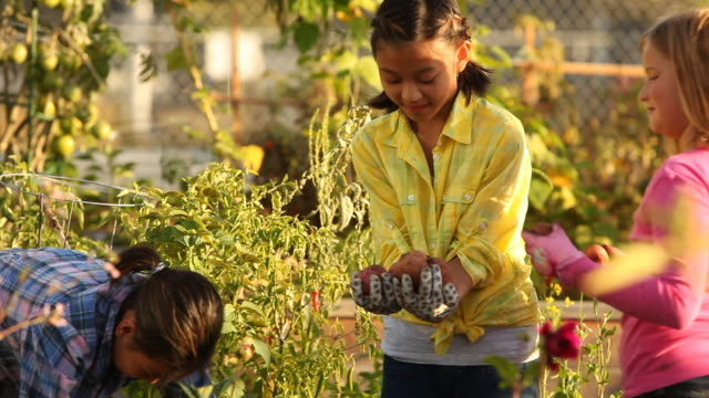 Three young girls pulling potatoes out of an urban garden