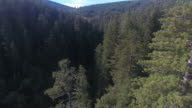 Through Tree TOPS LONG flight Redwood Forest, Aerial, 4K, 49s, 32of50, Forest Trees, Northern California Tallest trees in the world, Sun flare, Hyperion Tree, world record, Stock Video Sale - Drone Discoveries 4K Nature/Wildlife/Weather Drone aerial video