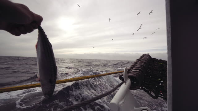 POV Throwing a fish to birds from fishing boat