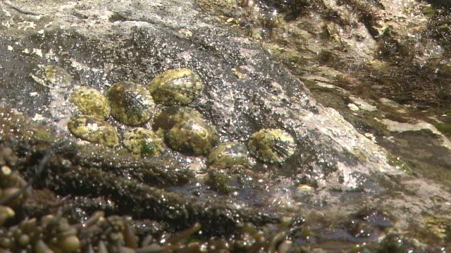 Tide Is Rising In Rocky Shore