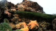 Tide pool with starfish