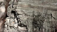 Tight shot of Aspen tree without leaves casting shadow on lichen covered rocks.