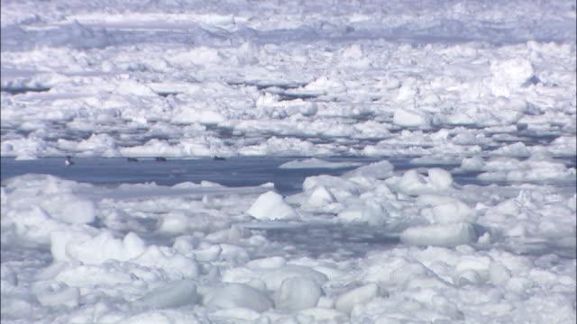 Tilt down as drift ice floats on Sea of Okhotsk, Shiretoko, Hokkaido