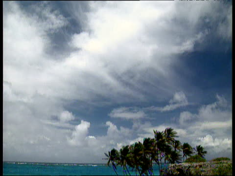 Tilt down from blue sky with wispy white clouds to sea beach and palm trees in foreground Barbados