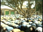Tilt down from tree as Muslim men kneel and pray Al Dahria Village Egypt