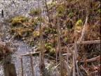 Tilt down over frozen pond in winter UK