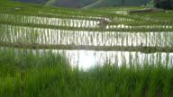 Kippen: Sonnenlicht reflektieren auf frisches Wasser in mich Reis Terrasse