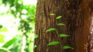 Tilt up 4K , Tropical plant on tree.
