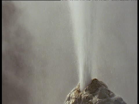 Tilt up as spurting geyser shoots water into air, Rotorua, North Island, New Zealand