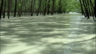 Tilt up from floodwaters to tree tops Available in HD.