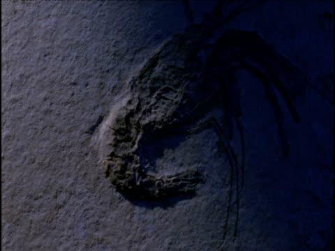 Tilt up over fossil shrimp in limestone