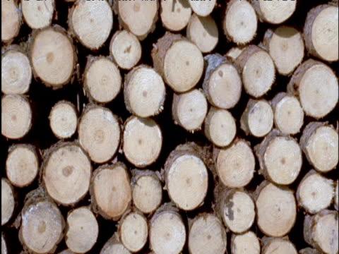 Tilt up over large forestry wood pile