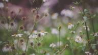 Tilt up shot of natural park with flower and river background - vintage footage