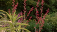 Tilt up to stems of red flowers in a botanical garden.