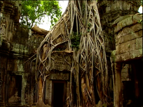 Tilt up tree roots grown over Angkor Wat ruins Cambodia