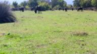 Tilt Up: Water Buffalo in rural