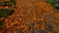 Panoramica verso l'alto, autunno foresta, Irlanda del Nord
