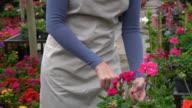 Tilt view of female worker checking plants in garden center