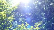 Tilting up through trees