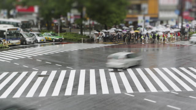 TL, MS, Tilt-Shift Crowds with umbrellas cross Hachiko crossing, Shibuya, in the rain / Tokyo, Japan
