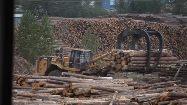 Timber Logging Facility Logging Machines Pile Harvested Trees Logs sorted and cut at a sawmill Wood planks wood chips sawdust West Fraser Timber Co...