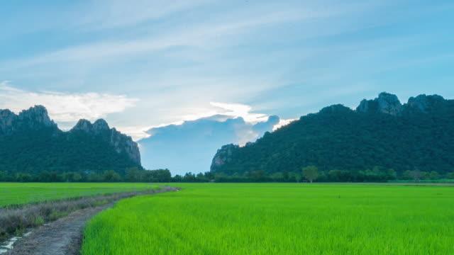 4K Zeitraffer: landwirtschaftliche Paddy Reis in Nordthailand