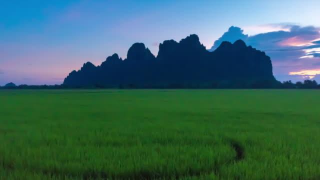 4K Zeitraffer: Schönheit landwirtschaftliche Paddy Reis in Nordthailand