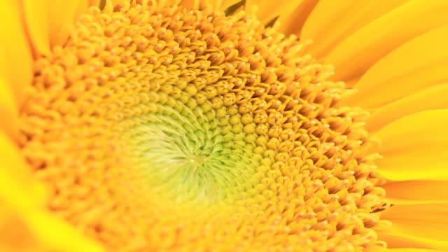 Zeitraffer blühenden Blumen. Fantastische Sequence. Vol3